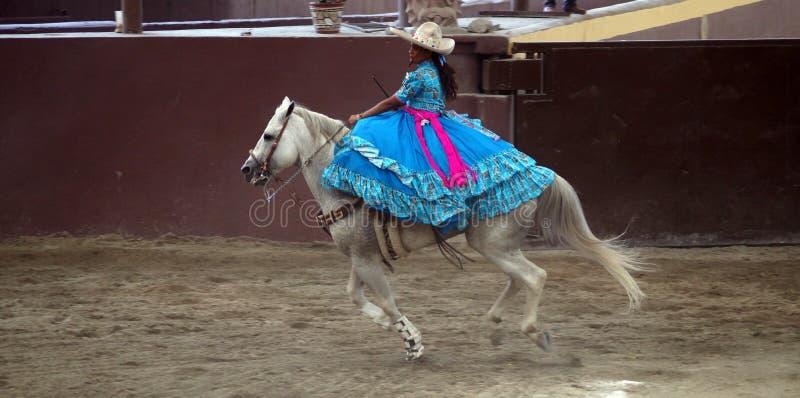 Женский всадник над ее лошадью в свете - голубом платье стоковое изображение