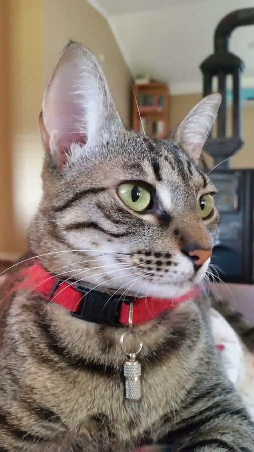 Женский кот стоковые фото