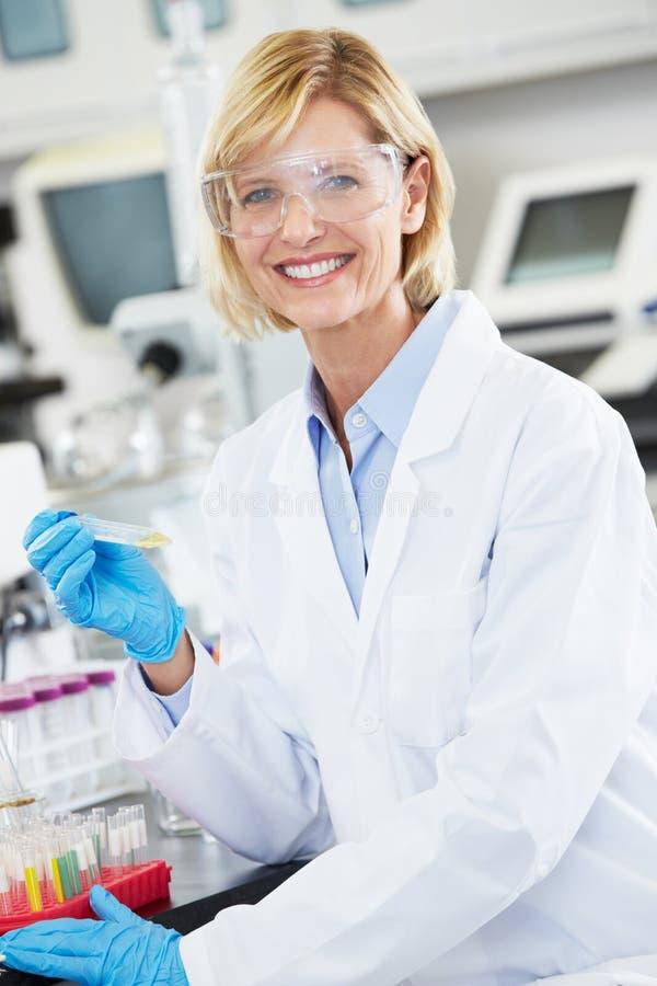 Женский научный работник работая в лаборатории стоковые фотографии rf