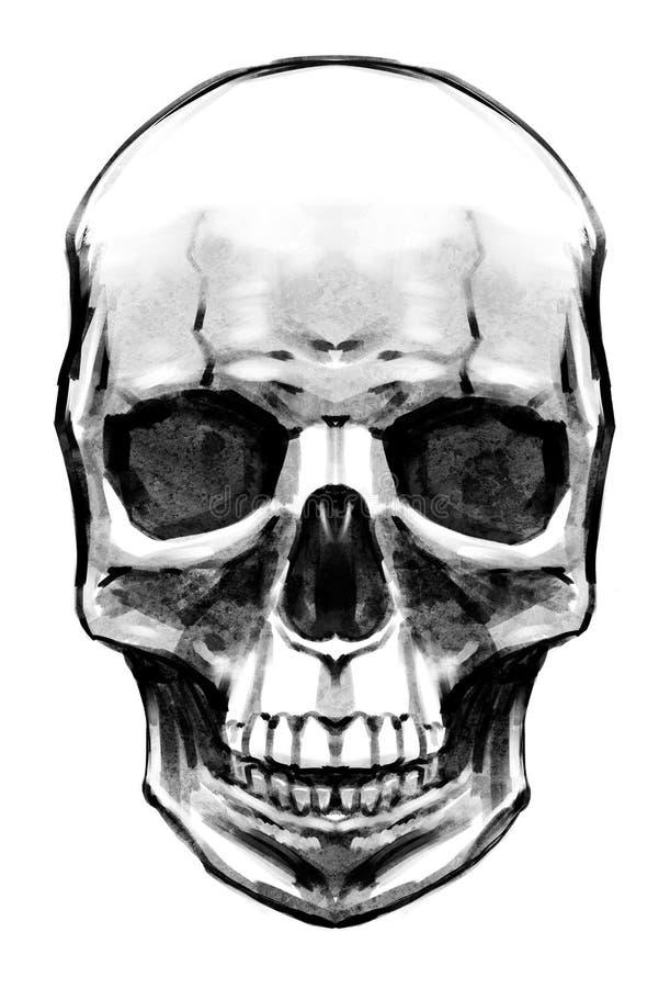 Женский покрашенный череп бесплатная иллюстрация