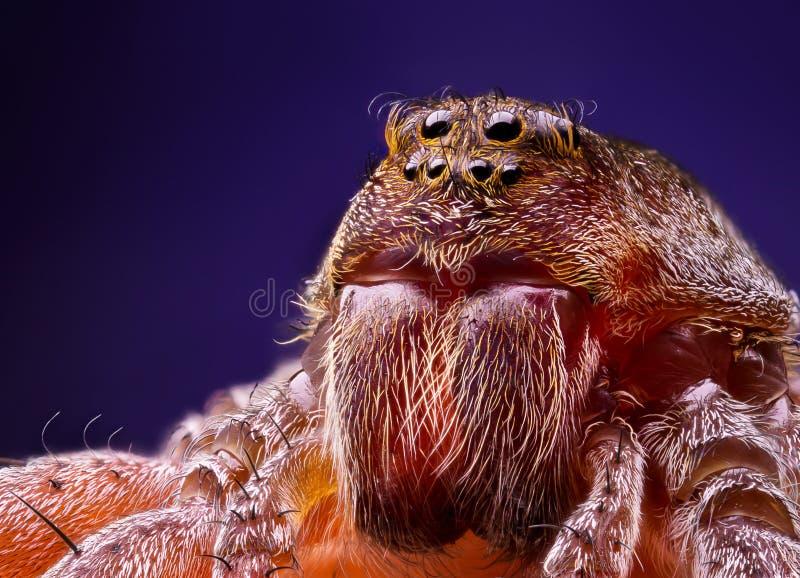 Женский портрет паука волка стоковые фотографии rf