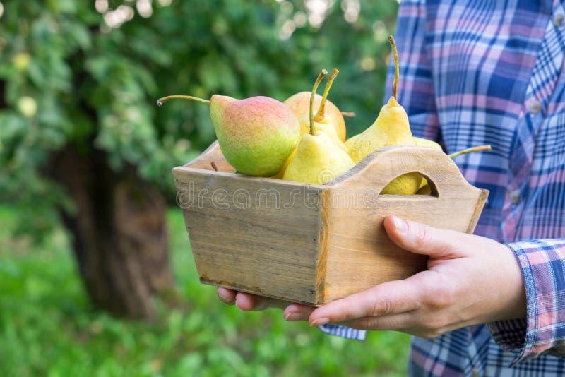 Женский фермер держа коробку нескольких груш в его руках стоковое изображение rf
