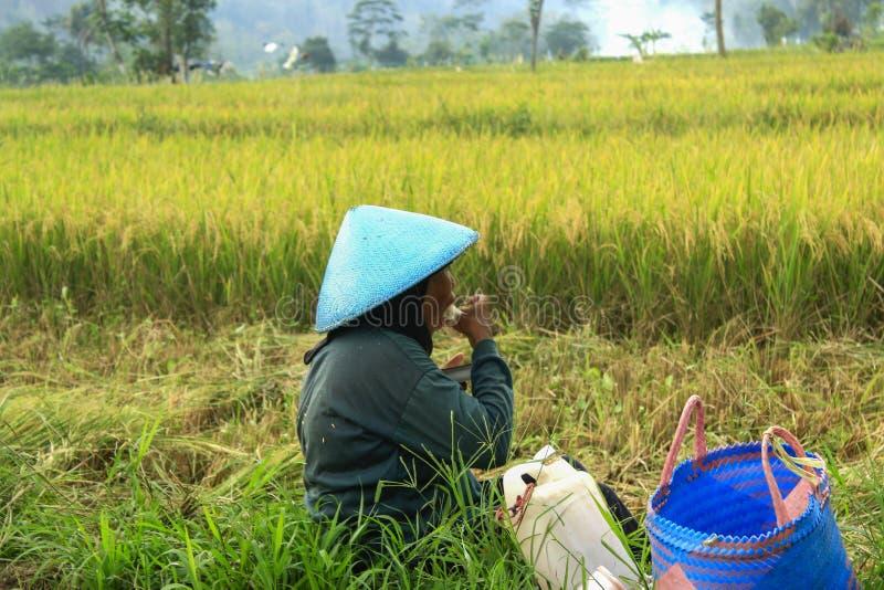 Женский фермер Индонезия стоковое изображение rf