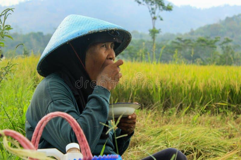 Женский фермер Индонезия стоковые фотографии rf