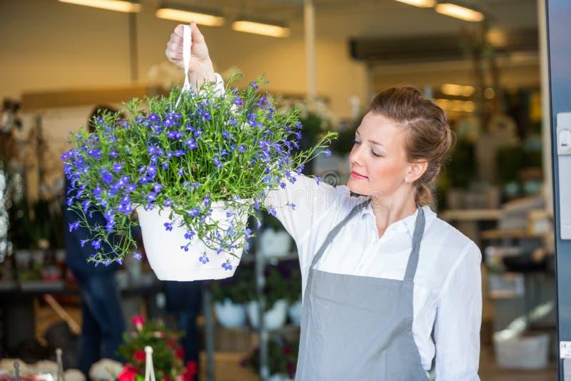 Женский флорист держа завод цветка в магазине стоковые фото