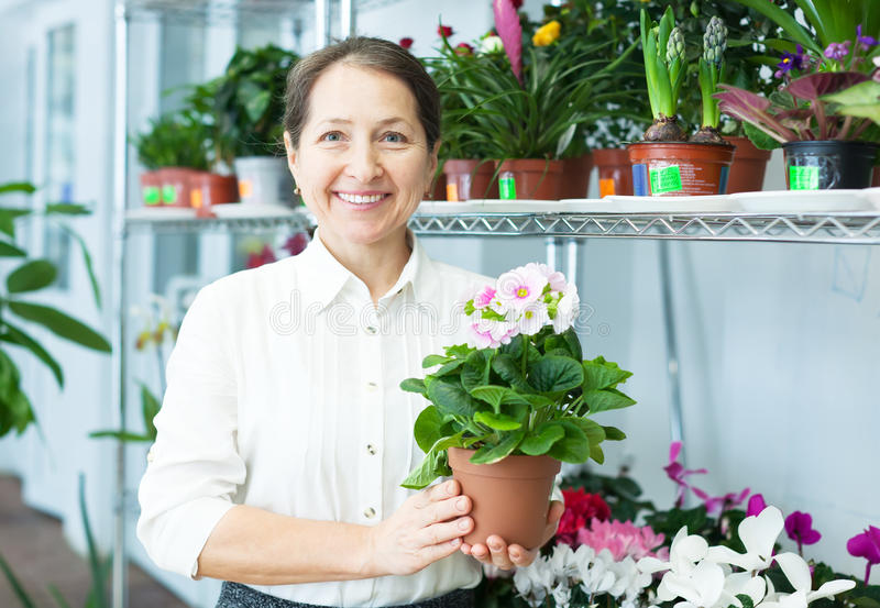 Женский florist с аврикулой (Primula) стоковая фотография