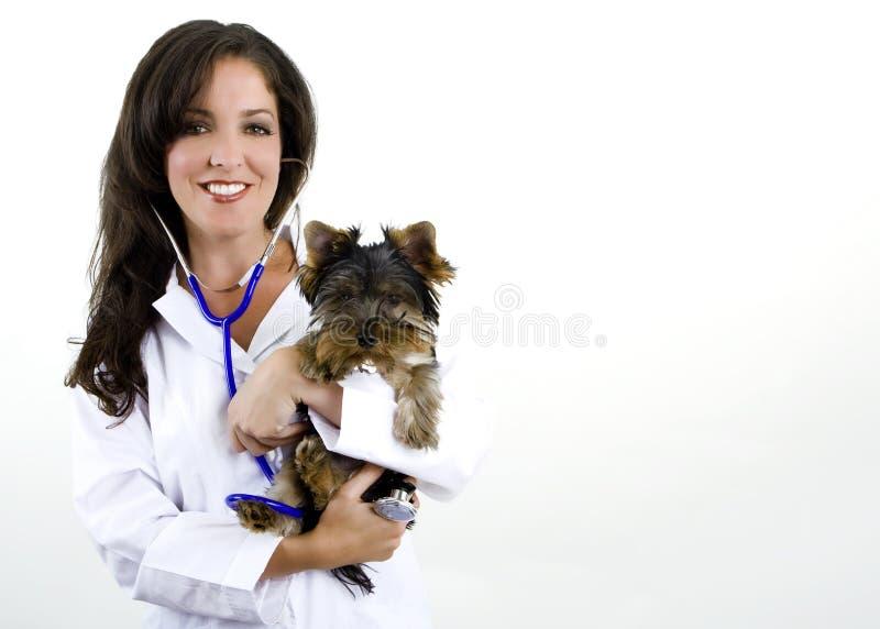 женский veterinarian стоковая фотография