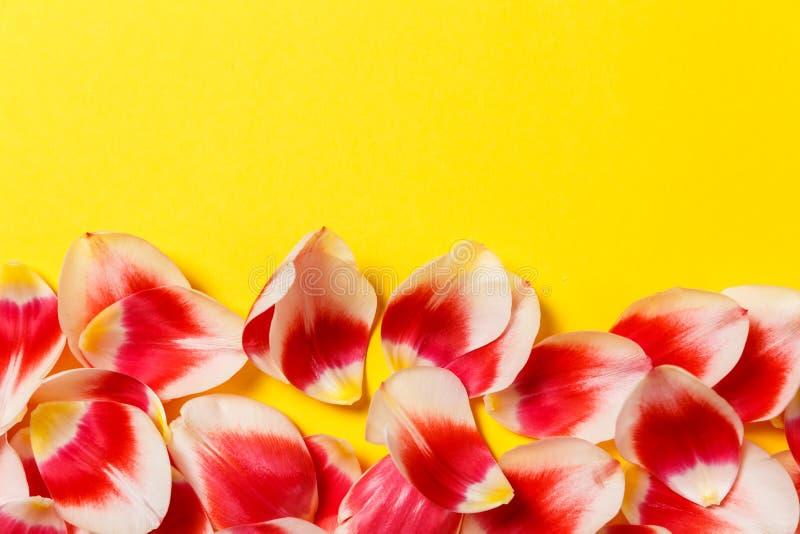 Женственная стильная насмешка вверх с цветком тюльпана, лепестками Космос для вашего дизайна, свадьбы экземпляра, приглашения, бл стоковое фото rf
