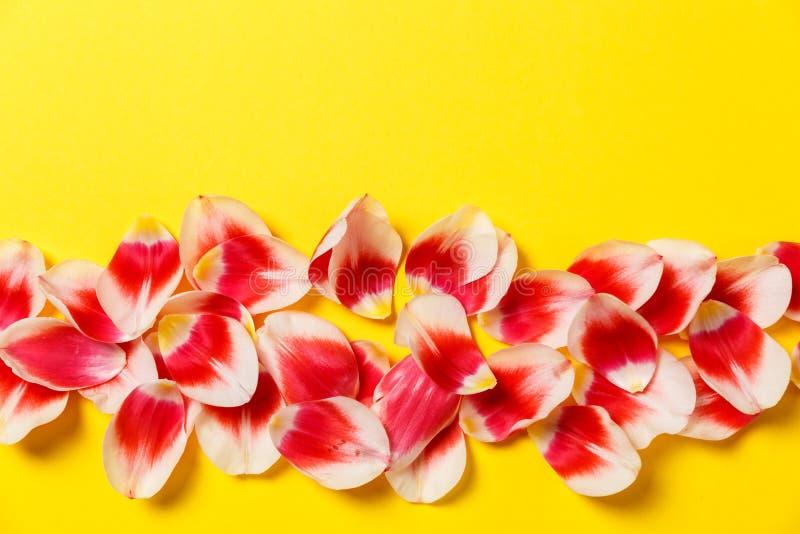 Женственная стильная насмешка вверх с цветком тюльпана, лепестками Космос для вашего дизайна, свадьбы экземпляра, приглашения, бл стоковое изображение rf