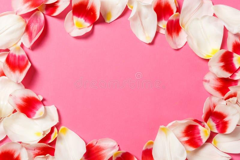 Женственная стильная насмешка вверх с цветком тюльпана, лепестками Космос экземпляра для вашего дизайна, для свадеб, приглашения, стоковое фото rf