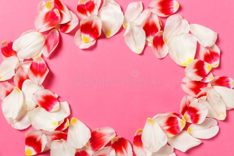 Женственная стильная насмешка вверх с цветком тюльпана, лепестками Космос экземпляра для вашего дизайна, для свадеб, приглашения, стоковые изображения rf