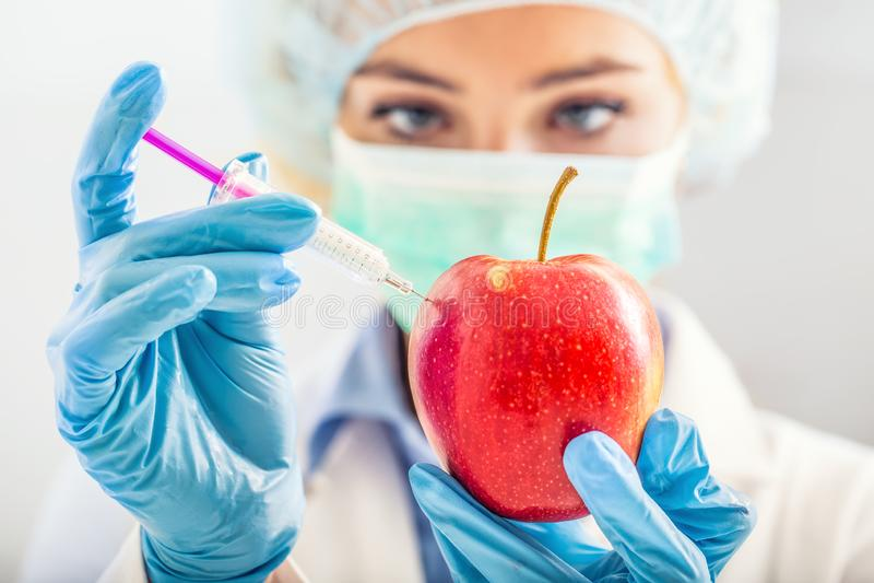 Женщина биолога genetically дорабатывает яблоко на более длинная жизнь Женские исследователь или ученый используя лабораторное об стоковое изображение