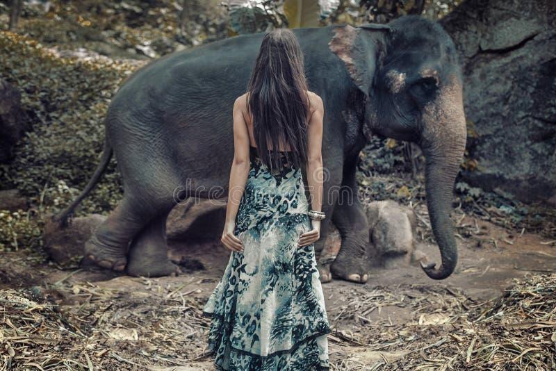 Женщина брюнет вытаращить на одичалом слоне стоковое фото