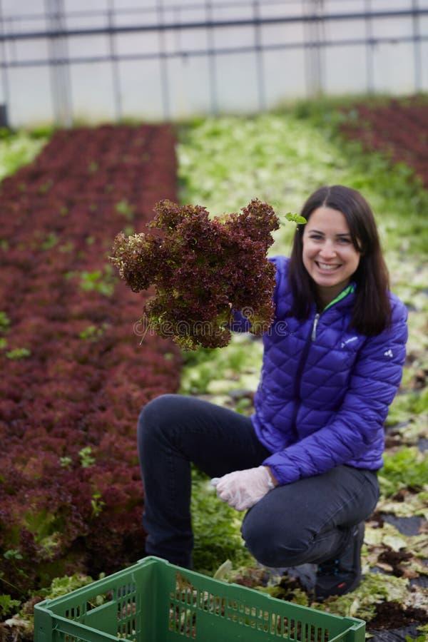 Женщина выбирая органические овощи стоковое изображение rf