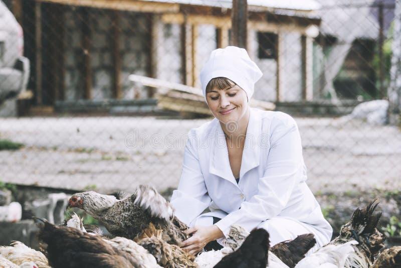 Женщина в ветеринаре купального халата усмехаясь молодом проверяет куриц дальше стоковое фото