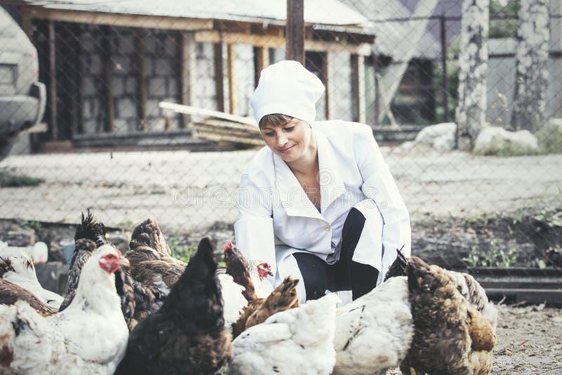 Женщина в ветеринаре купального халата усмехаясь молодом проверяет куриц дальше стоковое изображение rf