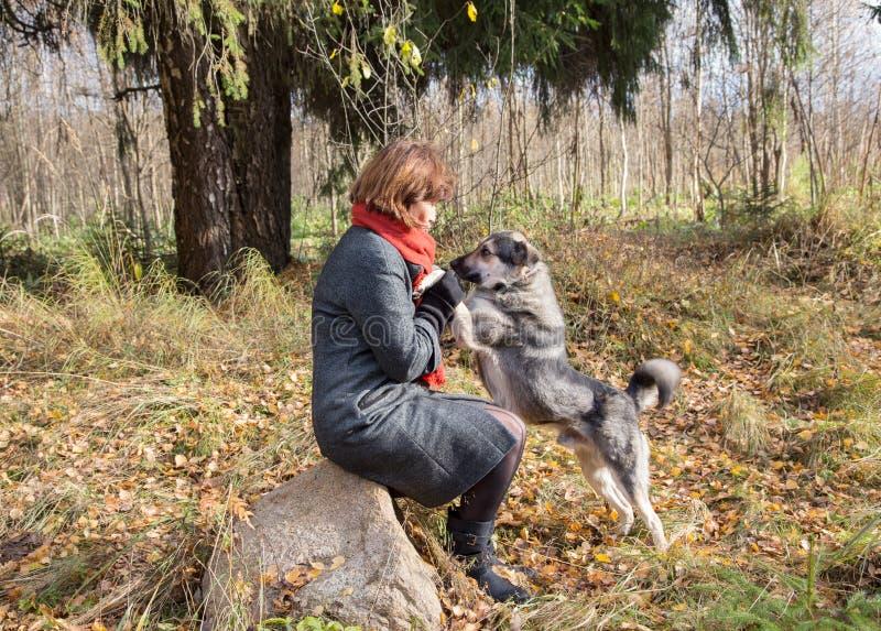 Женщина в древесинах идя с собакой в осени стоковое изображение