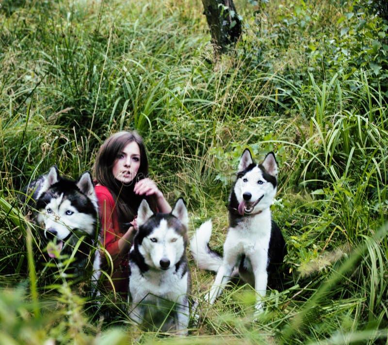 Женщина в красном платье с деревом wolfs, лес, осиплые собаки стоковые изображения
