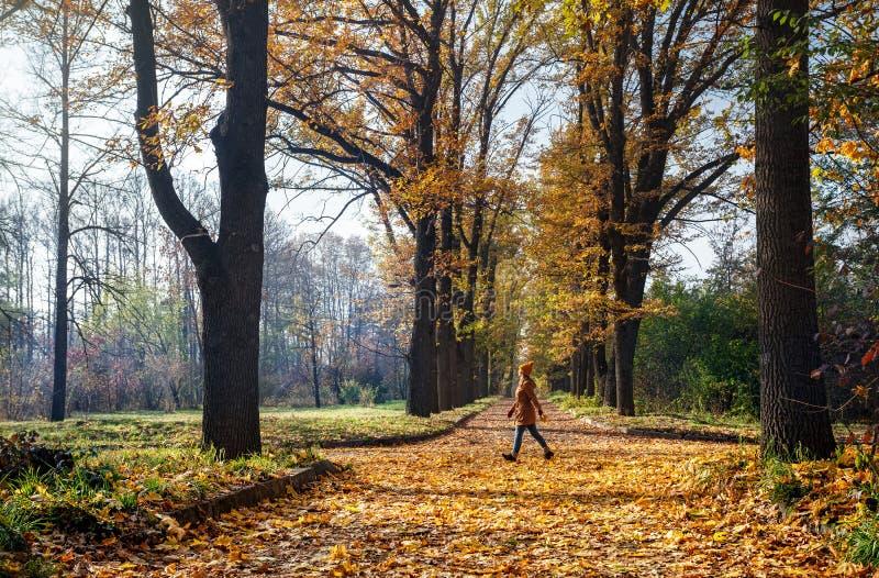 Женщина в парке осени стоковые изображения