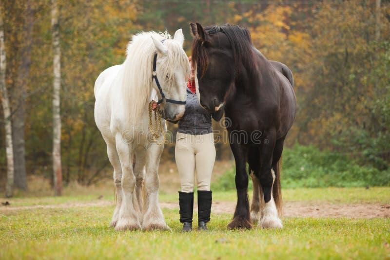 женщина графства 2 лошадей стоковые изображения rf