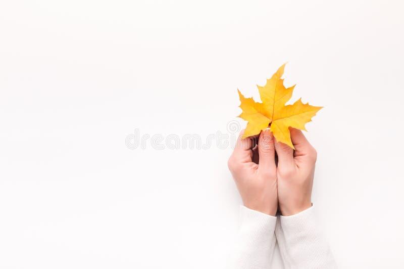 Женщина держа желтый кленовый лист в руках на белизне, стоковые фотографии rf