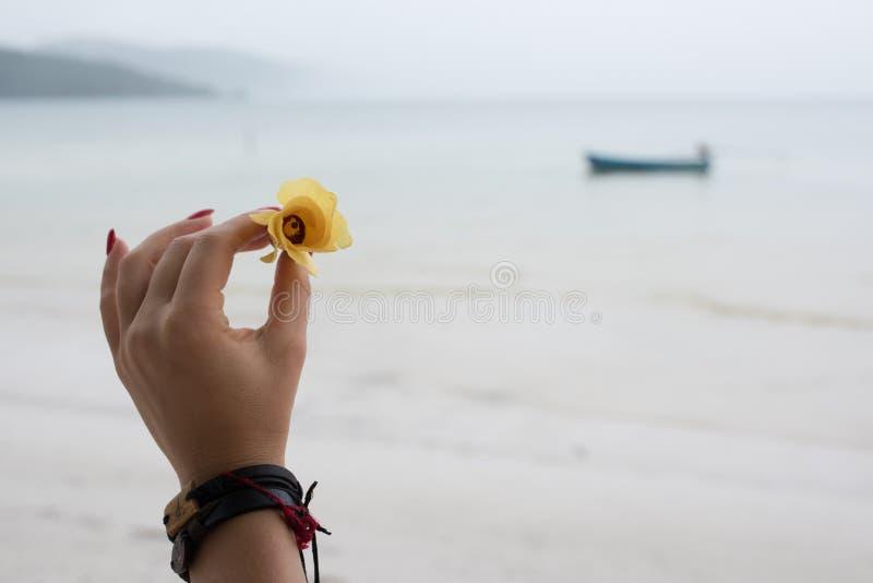 Женщина держа желтый цветок в руке стоковое изображение rf