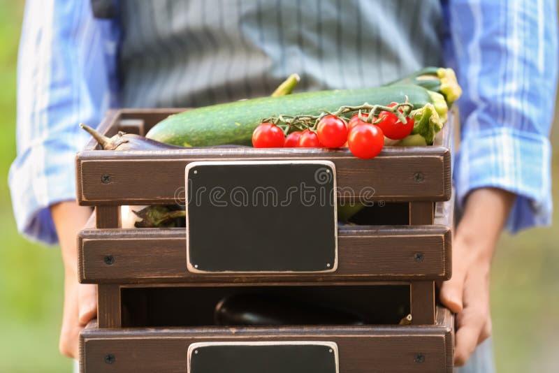 Женщина держа клети с различными свежими овощами, крупным планом стоковое изображение