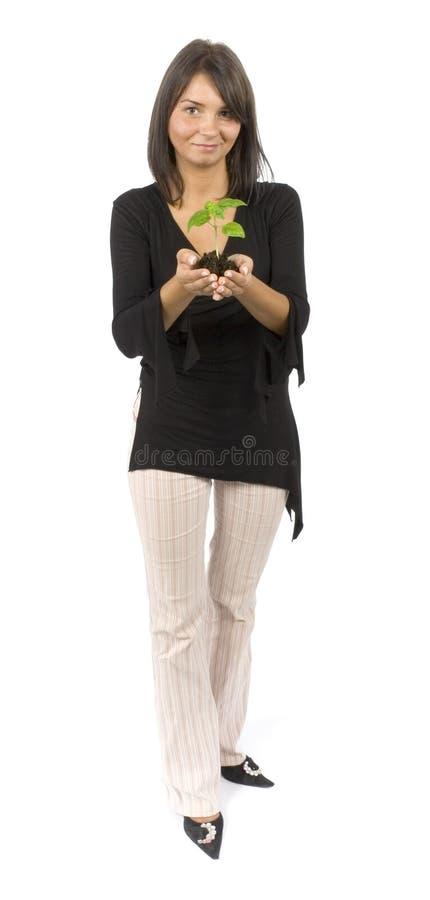 женщина завода стоковые фотографии rf
