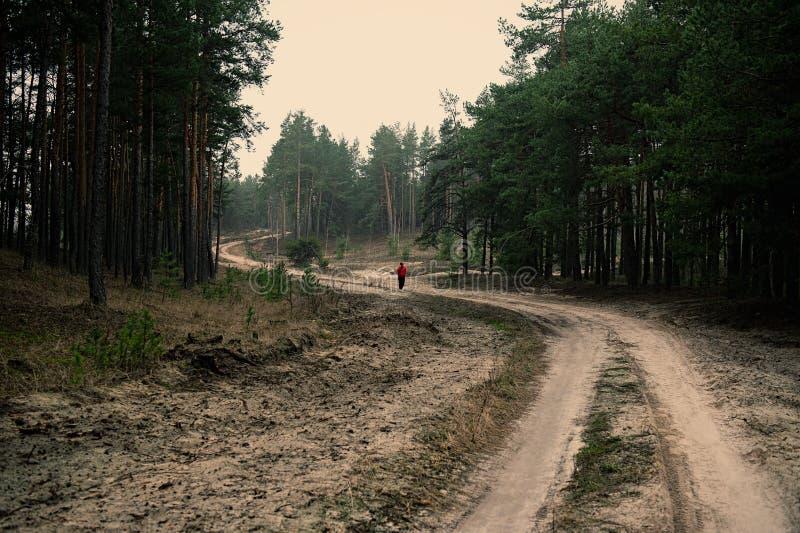 Женщина идет вдоль грязной улицы в сосновом лесе в вечере в пасмурной погоде стоковое изображение rf