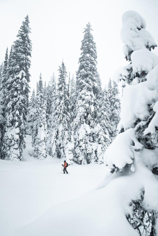 Женщина идет в снежный лес с лыжами в туманной погоде стоковая фотография rf