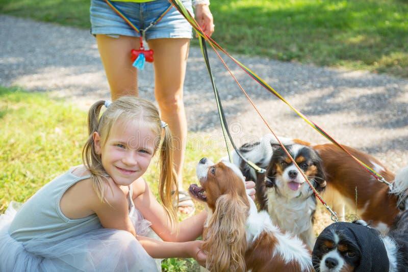 Женщина идя пакет Spaniel короля Чарльза небольших собак кавалерийского в парке Профессиональное обслуживание ходока собаки стоковое фото