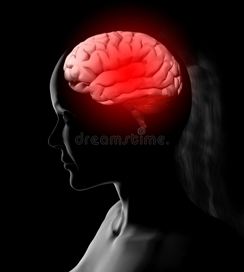 женщина иллюстрации мозга стоковые фото