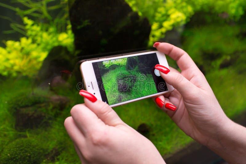 Женщина используя умный телефон для того чтобы принять фото аквариума стоковые изображения rf