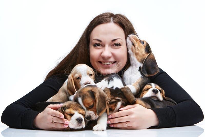 Женщина и большая группа в составе щенята бигля стоковое фото
