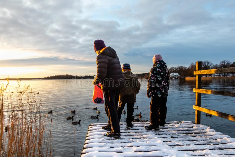 Женщина и дети стоя на моле с птицами утки кряквы снега питаясь в воде против захода солнца зимы стоковое изображение