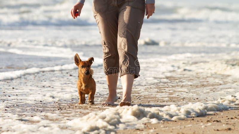 Женщина и ее милая маленькая собака идя для того чтобы накренить на пляже стоковая фотография