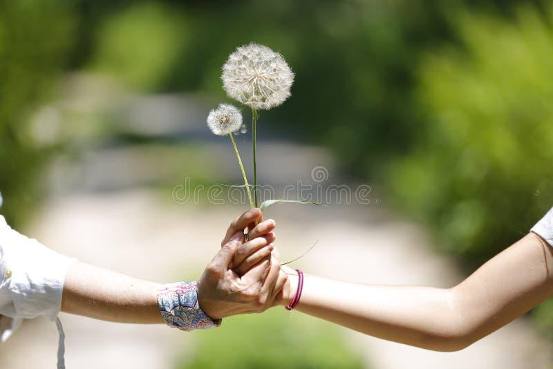 Женщина и ее дочь рука об руку с цветками в саде стоковое фото rf