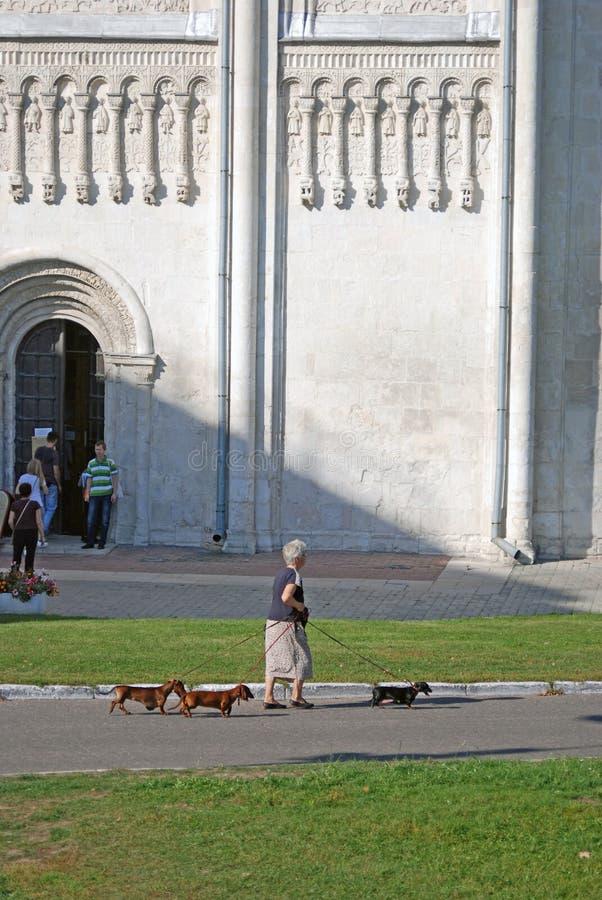 Женщина идет 3 собаки собором Dmitrievsky в Владимире, России стоковое изображение