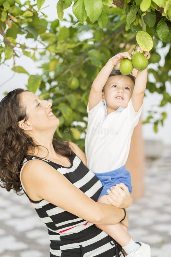 Женщина и ребенок выбирая вверх лимоны стоковое фото
