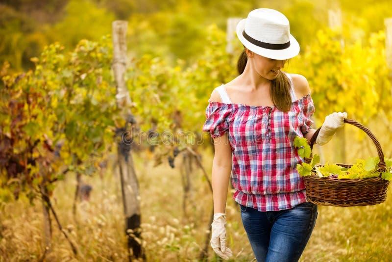 Женщина идя в виноградник стоковая фотография