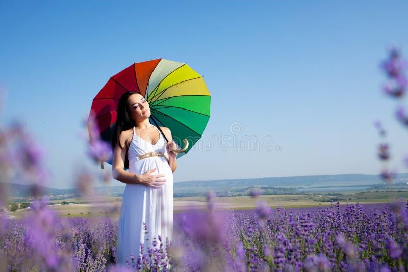 женщина лаванды стоковые изображения