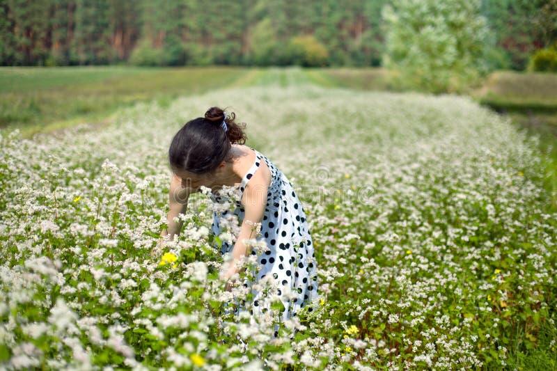 Женщина на поле гречихи стоковая фотография rf