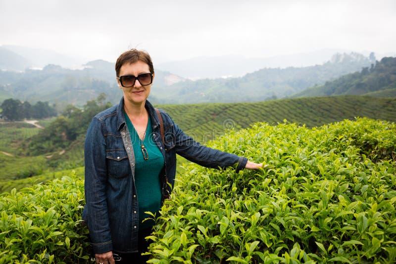 Женщина на плантациях чая гористых местностей Камерона, Малайзии стоковые фотографии rf