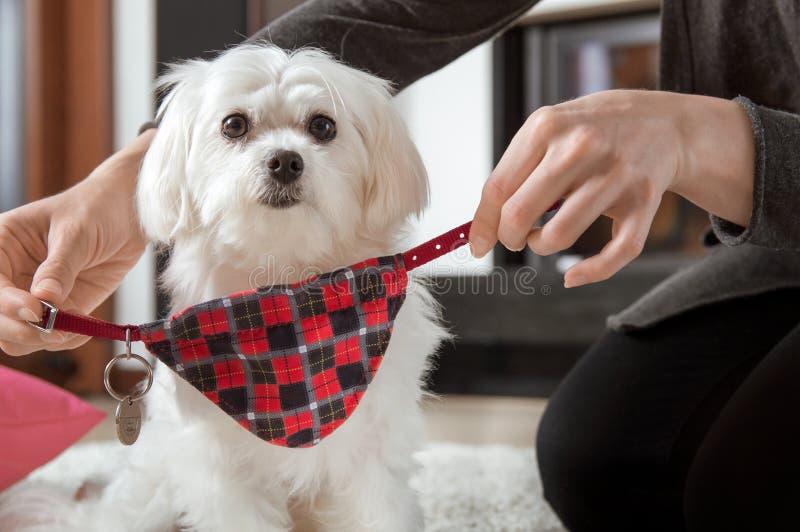 Женщина носит воротник собаки стоковое фото