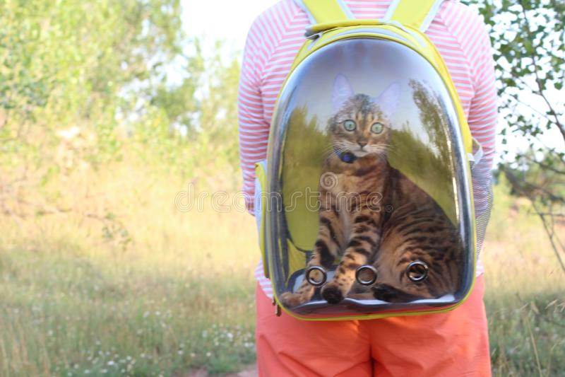 Женщина нося его кота в прозрачном рюкзаке пузыря стоковое фото