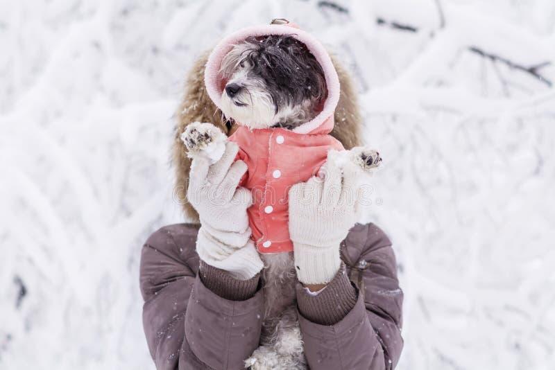 Женщина обнимая ее малую белую собаку в лесе зимы идя снег время стоковые изображения rf