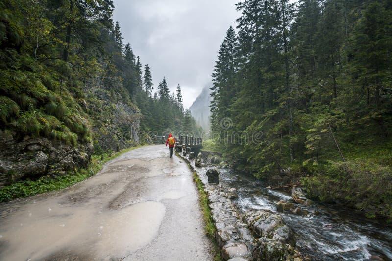 женщина дождя гуляя стоковое изображение