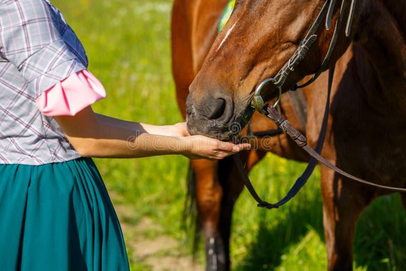 Женщина подает лошадь с животным фаворита рук стоковое изображение