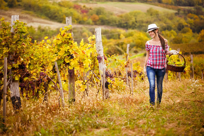 женщина прогулок хлебоуборки виноградин стоковое изображение