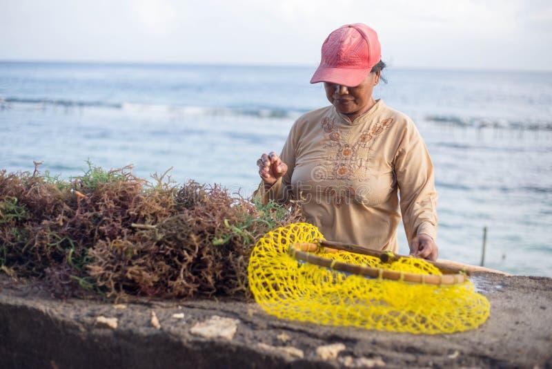 Женщина развивающаяся страна сортирует вне морские водоросли от ее обрабатывая землю сети стоковая фотография rf